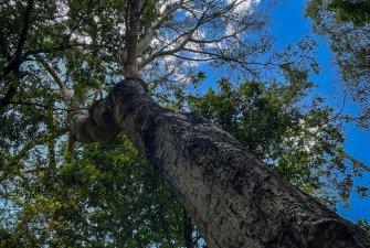 NP Gamo Gofa nabízí příjemné klima pod stromy s liánami.