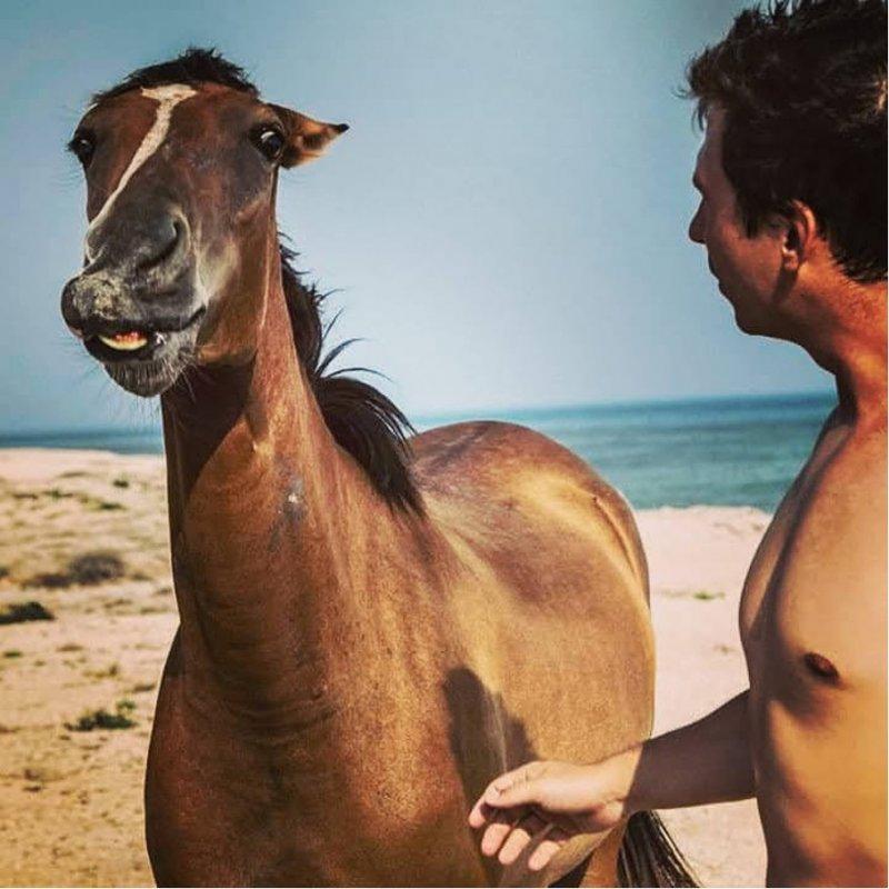 Divoký kůň, Perský záliv /Írán 2020.
