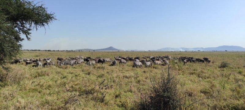 Členové TKS2 zažili Serengeti