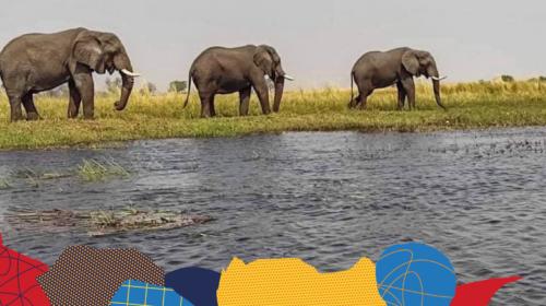 V deltě řeky Okavango, aneb rozbila se loď!